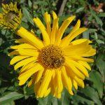seniorenfreundliches Wohnen Trebsen Sonnenblume